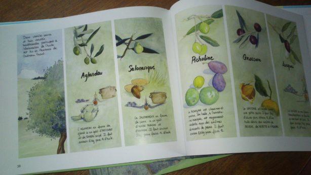 livres olives variétés