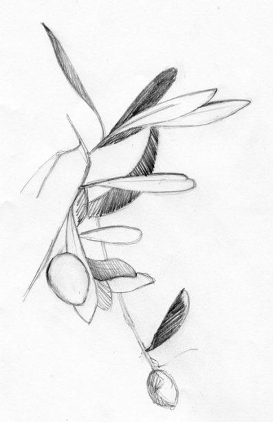 variétés olives 02