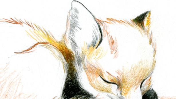 petit renard endormi
