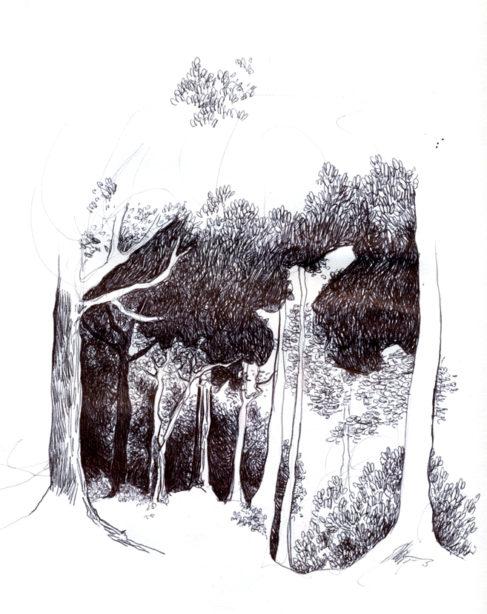La forêt... Chaperon rouge 1