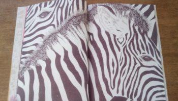 Ame Animale - zèbres